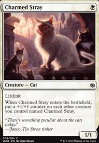 Charmed Stray